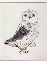 Image of Arctic Owl