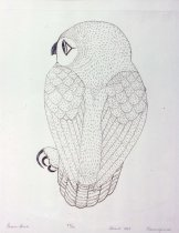 Image of Green Owl