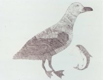 Image of Gull with Char