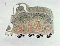 Image of Umingmuk (Umimmaq) (Muskox)