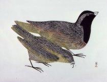 Image of Kupanuaq (Sparrow)