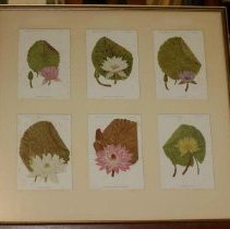 Image of 77.013.4 - Color Prints of Water Lilies