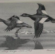 Image of Duck Stamp Design