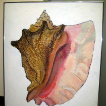 Image of 87.052.3 - Conch Shell From Cozumel