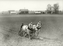 Image of Farm crop being planted from a planter pulled by two horses - Photograph, Black-and-White