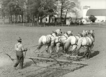 Image of Farm field being tilled by a drag pulled by horses