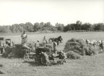Image of Farm crop being harvested with a steam engine and tractor