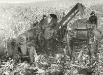 Image of Corn crop being harvested by a corn picker and loaded into a wagon