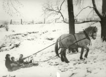 Image of Children on a sled being pulled by a horse - Photograph, Black-and-White