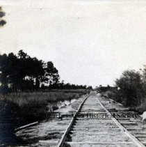 """Image of Scenes of railroad that carried minerals from Mineral City to Pablo Beach -  """"620 ft. of fill at 10th' SL'. Fill complete between stakes 165 & 170.Looking North"""" Rails laid on ties; Dog standing to right of rails; Mature trees to left back; Marsh evident to left.  Mineral City, 1919"""