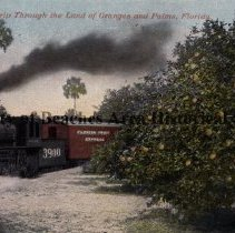 """Image of """"A Trip through the Land of Oranges  and Palms, Florida"""" - Card sent from  Tallahassee, Fl 2/24/1912 """"A Trip through the Land of Oranges  and Palms, Florida"""" Train #3900 going through an orange grove."""