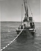 Image of Pulling in a purse seine net