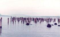 Image of Pilings at Ship Harbor