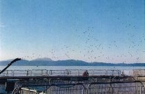 Image of (.002) Panfish USA fish farm off Hope Island
