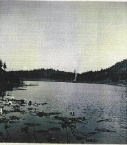 Image of clearing Little Cranberry Lake bog`