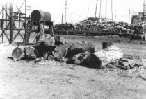 Image of Log yard and oil tank 1957 (.061)