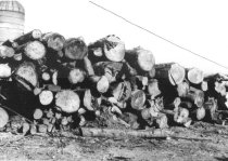 Image of Log yard and sawdust burner 1957 (.062)