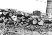 Image of Log yard old scooner, LA MERCED, and sawdust burner 1957 (.066)