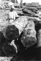 Image of Logs inspectintg in yard 1957 (.070)