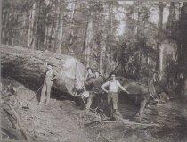 Image of Logging in Anacortes