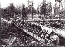 Image of Logging in Washington - by Darius Kinsey