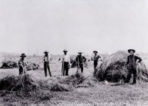 Image of D.VII.015 - Haying on the Ball farm