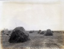 Image of 3.5 tons of hay to cure