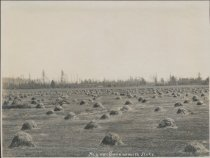 Image of Hay on Swinomish flats