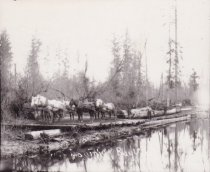 Image of Logging near Bow, WA