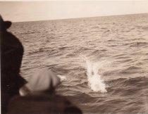 Image of D.XX.003.037 - Whale spout