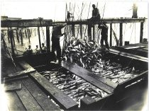 Image of Emptying fish trap