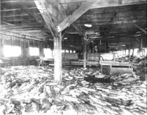 Image of WF 1929 - Salmon on unknown cannery floor
