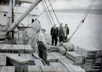 Image of Unloading oysters