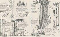 Image of Morrison trail #104 pamphlet