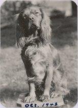 Image of 2012.098.089 - Olga Amala's dog Dopey