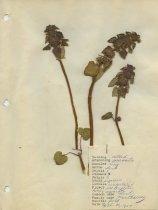 Image of 2013.027.001-.010 - Specimen, Plant