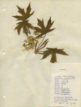 Image of 2013.027.011-.023 - Specimen, Plant