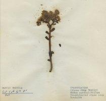 Image of 2013.027.073-.082 - Specimen, Plant