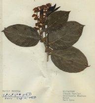 Image of 2013.027.083-.092 - Specimen, Plant