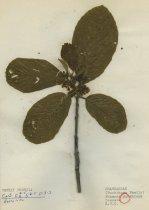Image of 2013.027.113-.122 - Specimen, Plant