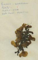 Image of 2013.027.142-.152 - Specimen, Plant