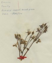 Image of dried flower