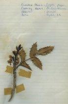 Image of 2013.027.194-.203 - Specimen, Plant