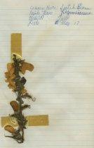 Image of 2013.027.214-.223 - Specimen, Plant
