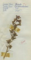 Image of 2013.027.224-.236 - Specimen, Plant