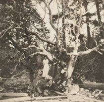 Image of Cora Allmond and friend in tree