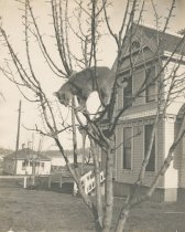 Image of Cora Allmond's cat in a tree