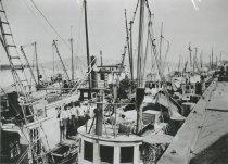Image of Fishing fleet at Cap Sante Basin