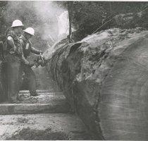 Image of sawing a log