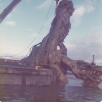 Image of D.XXV.095.011 - W.T. PRESTON pulling snag from water